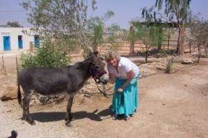 Meet my Donkey