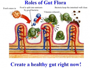 Why We Must Ensure That We Have The Right Bacteria In Our Gut And How We Can Acquire Them.